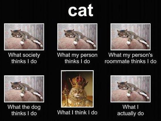 Cat - Funny Memes