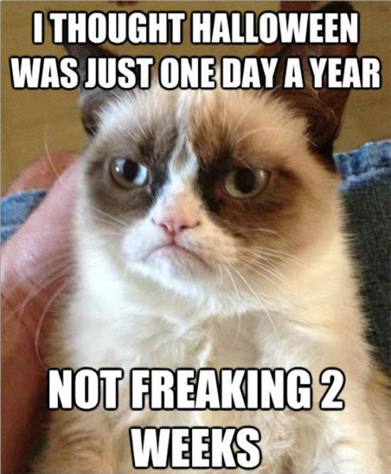 Funny Memes 225