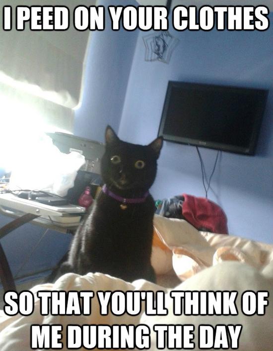 Funny Memes Part 12 - Pics  (2)
