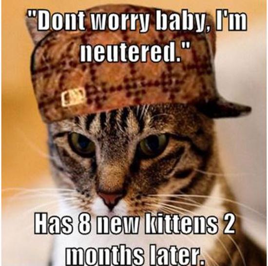Funny Memes Part 12 - Pics  (4)
