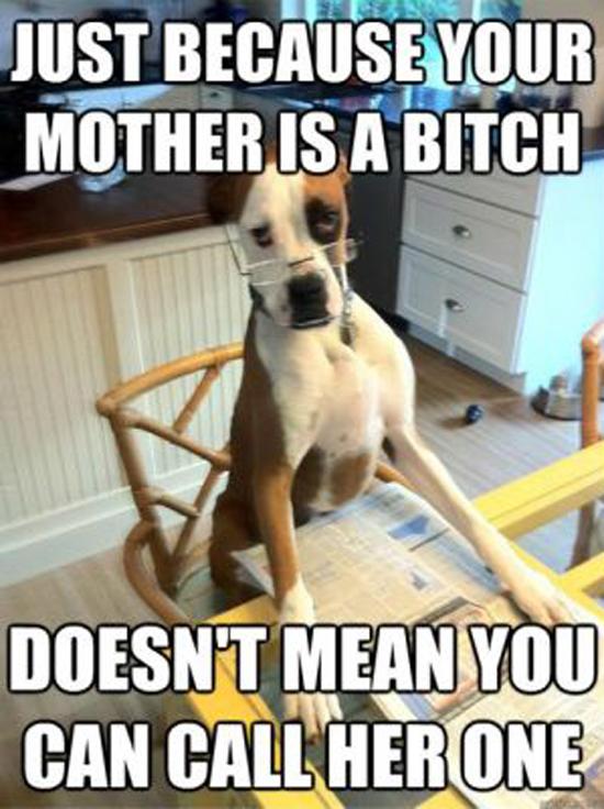 Funny Memes Part 12 - Pics  (5)